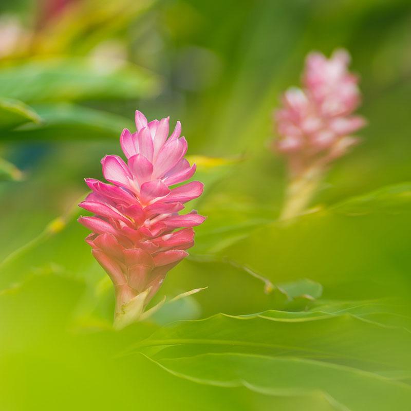 directory_garden_flowers.jpg